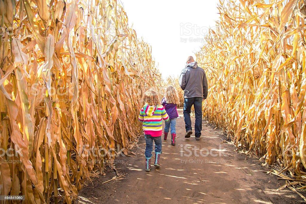 Two Girls & Dad Walking Through Autumn Corn Maze stock photo