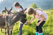 Two Girls Feeding Donkey on the Mountain Pasture