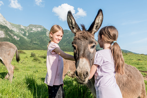 Two Girls Feeding and Caressing Donkey on the Mountain Pasture