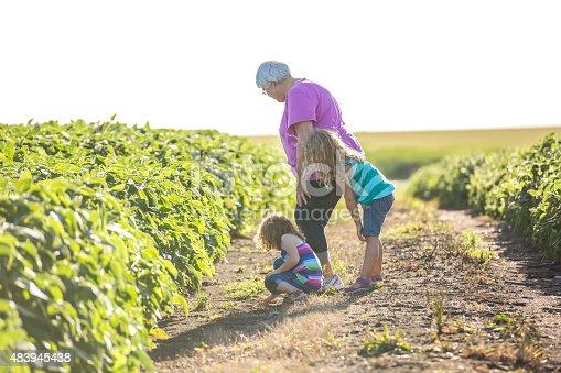 istock Two Girls & Grandma In Trail Between Two Soybean Fields 483945438
