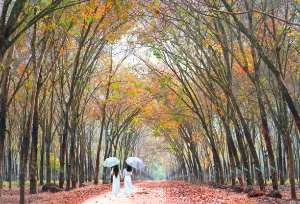 two girls in long dress to cover umbrella holding hands, going end of road - ao dai stock photos and pictures
