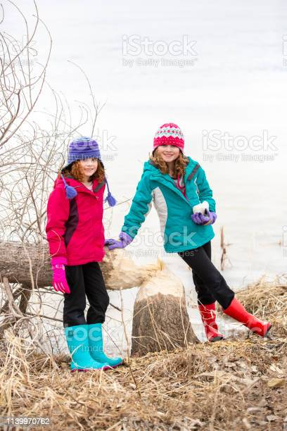 Photo of Two Girls Standing By Fallen Tree From Beaver Chewing