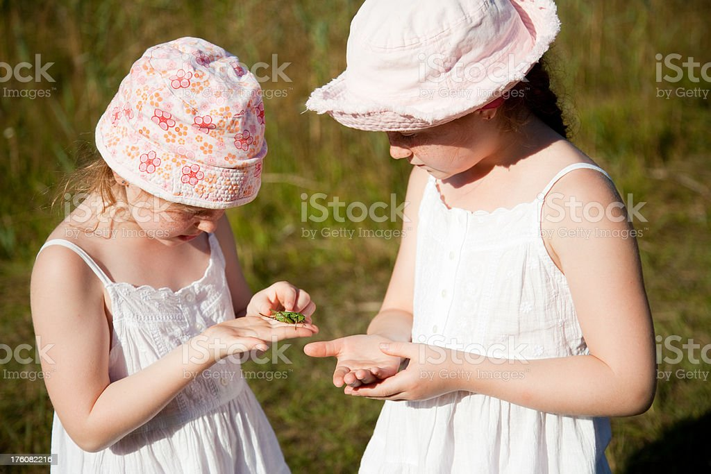 "Two girls studying a captured grasshopper ""Two children, aged 7 and 9, holding a grasshopper."" Animal Stock Photo"