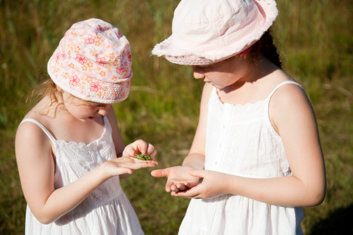 Two Girls Studying A Captured Grasshopper Stock Photo - Download Image Now