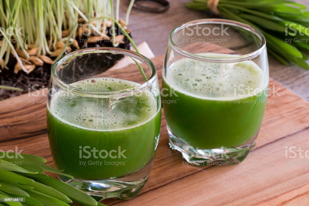 Two glasses of barley grass juice with fresh barley grass stock photo