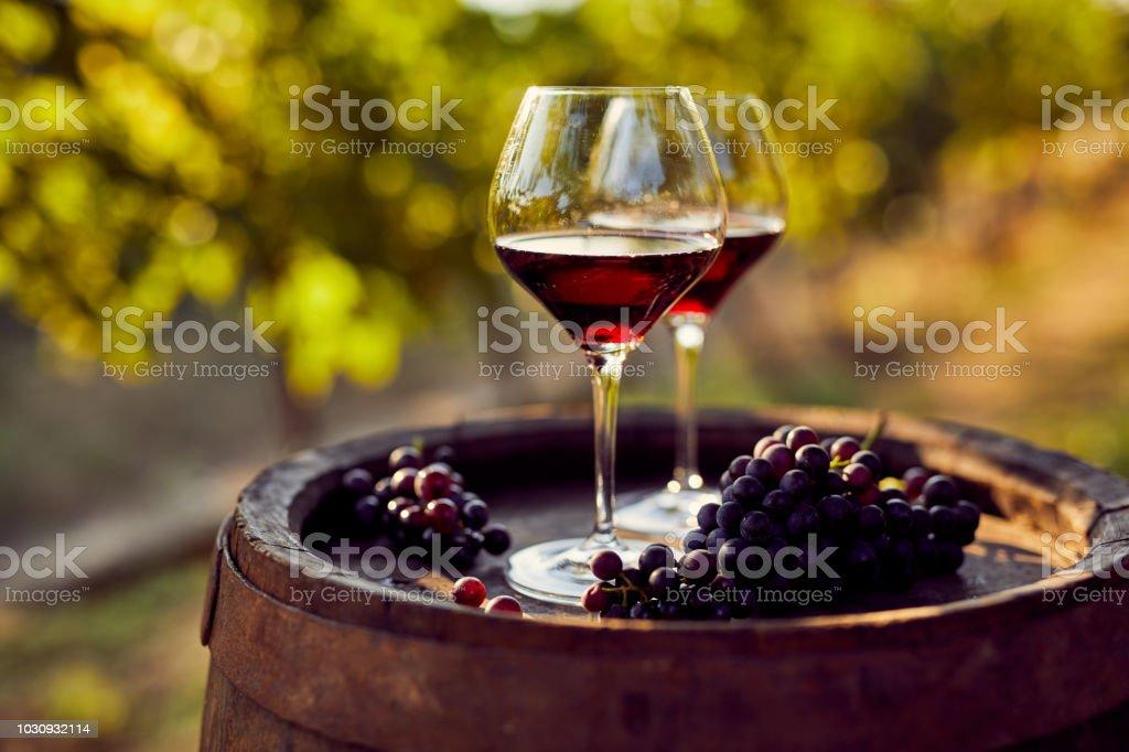Zwei Gläser Rotwein im Weinberg – Foto