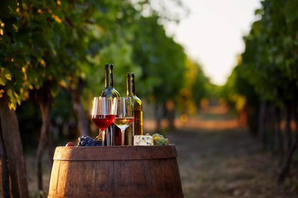 två glas vitt och rött vin med flaskor i solnedgången. - vineyard bildbanksfoton och bilder