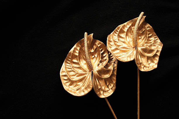 Two golden lily stock photo