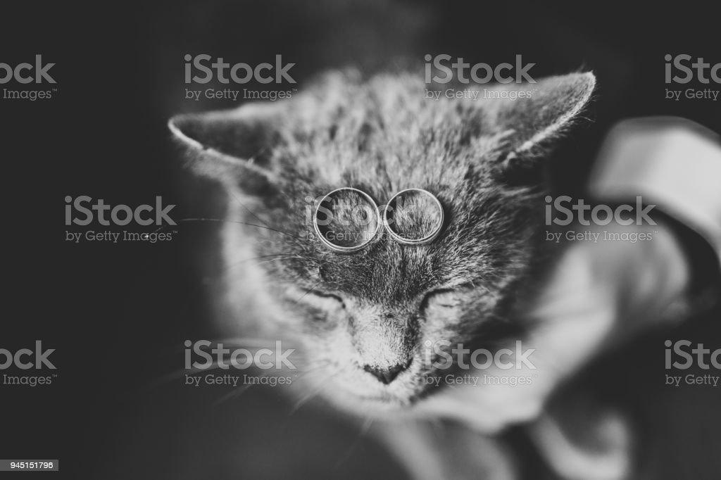 Zwei Goldene Hochzeit Ringe Mit Lustige Katze Stockfoto Und