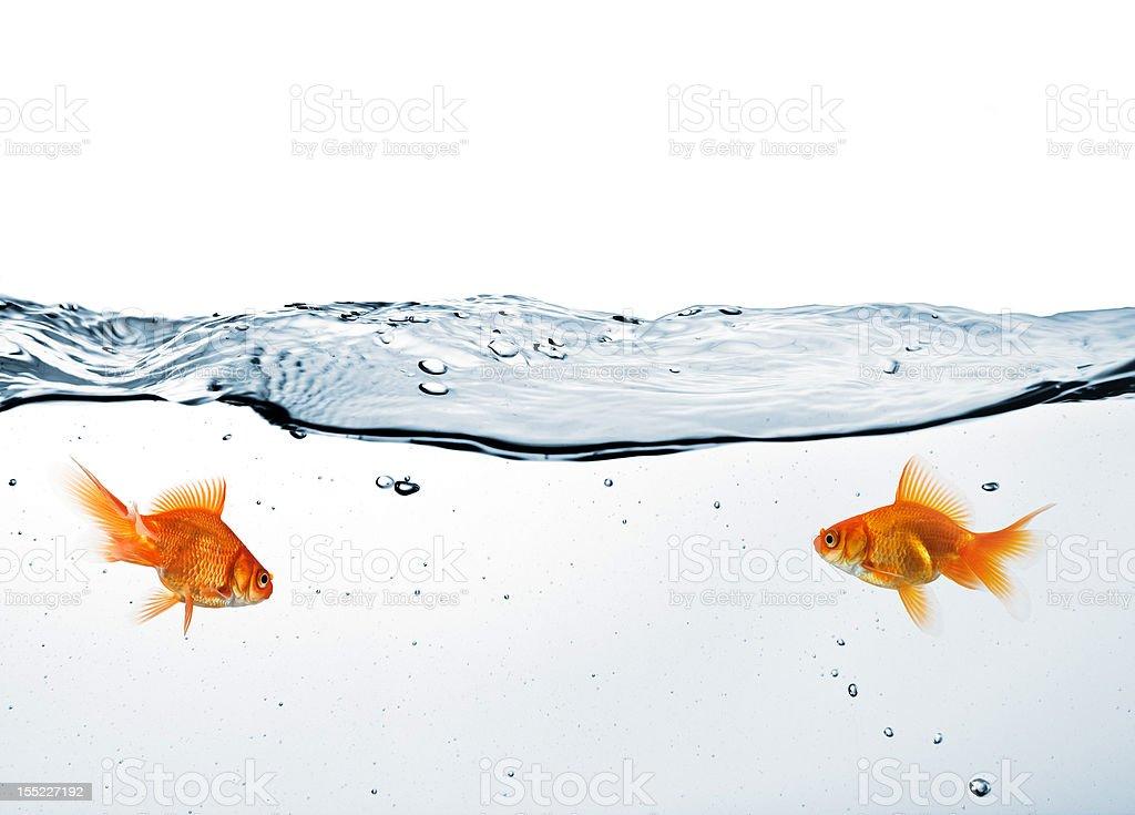 Glikas Images in water II