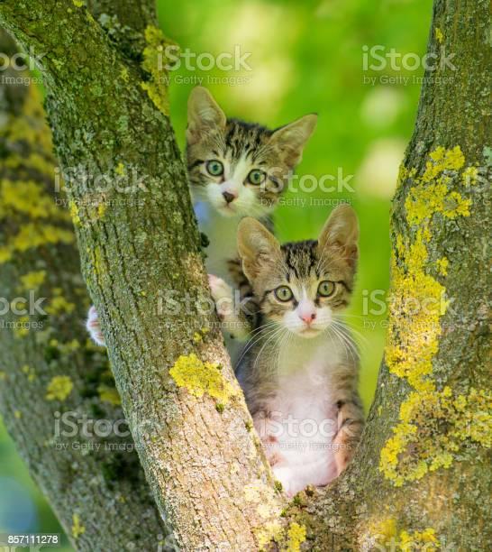 Two gray kitten in a tree picture id857111278?b=1&k=6&m=857111278&s=612x612&h=hrfadigfhth3ciq9vsaomfxa2nivckxxidoc6mw1zao=