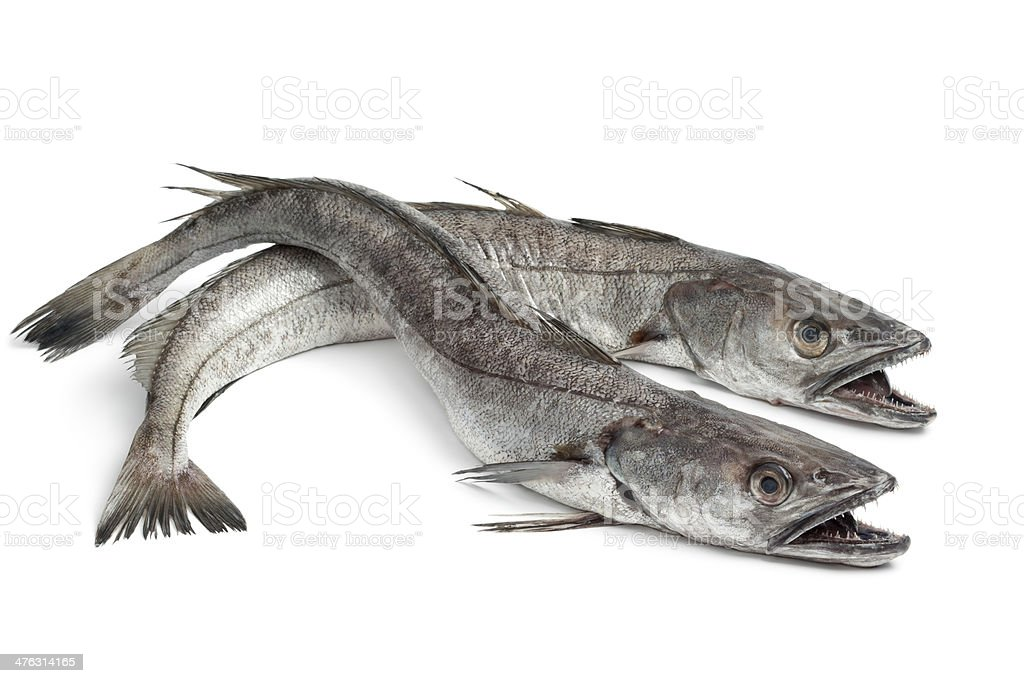 Two Hake fishes stock photo