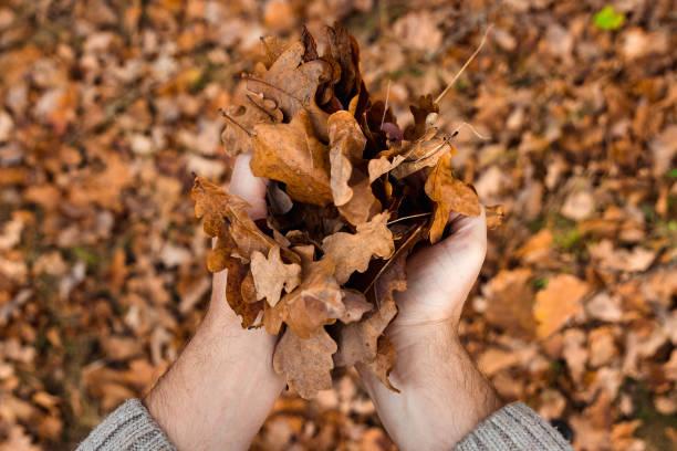 due mani di una ragazza asiatica che tiene con attenzione una foglia d'acero rosso sullo sfondo del muschio e le foglie autunnali sul pavimento, stagione autunnale nel tempio enkoji, kyoto, giappone - forest bathing foto e immagini stock