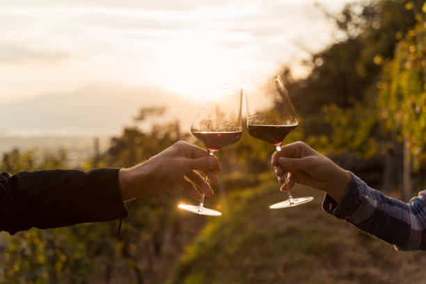 Two hands clinking red wine glass in a Vineyard during sunset two glasses of cocktail making cheers. grapevine in Ticino red wine stock pictures, royalty-free photos & images