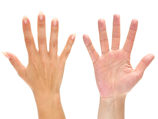 Hand Waving Stock Photos, Pictures & Royalty-Free Images ...