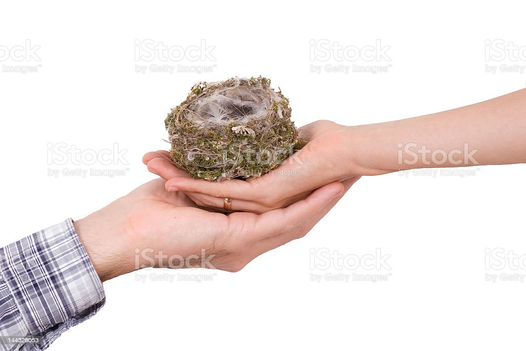 Two hands with bird's nest on white stock photo