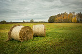 istock Two hay bales in the meadow and autumn trees 1287054137