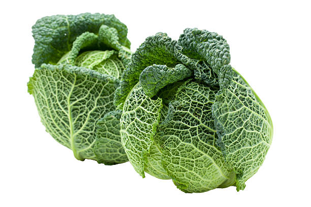 Two Heads of ripe Savoy cabbage isolated stock photo