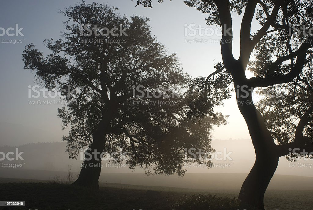 Two holm oaks, fog and the sun, Catalan Pre-Pyrenees stock photo