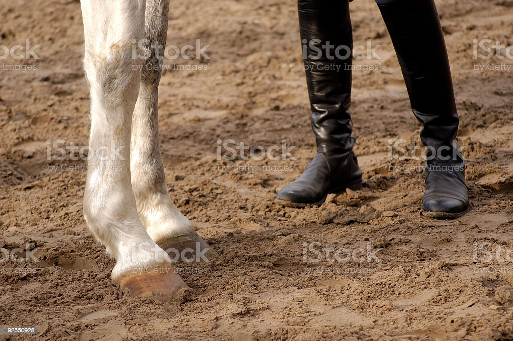 two horse and human legs royalty-free stock photo