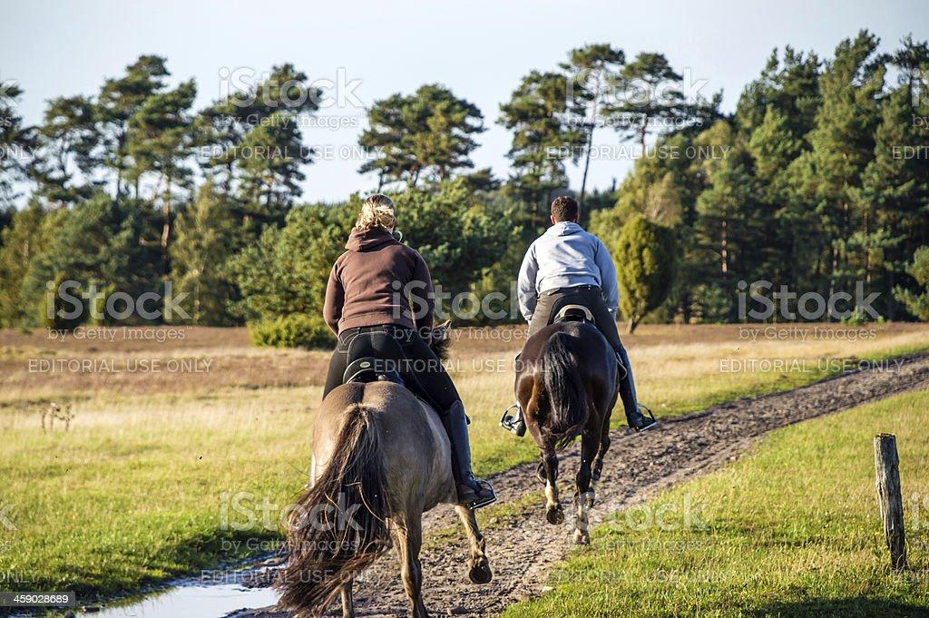 Two horsemen galloping on horses stock photo