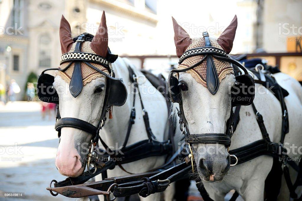 Two Horses  A Cart For Driving Tourists Lizenzfreies stock-foto