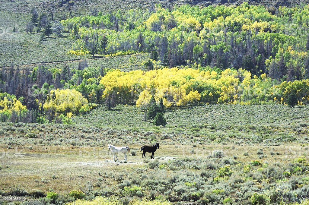 Two Horses and Yellow Trees royalty-free stock photo