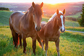 two horses at sunset in Bavaria Germany