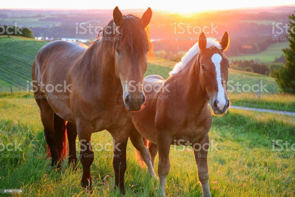 Dos caballos en puesta del sol, Baviera, Alemania - foto de stock