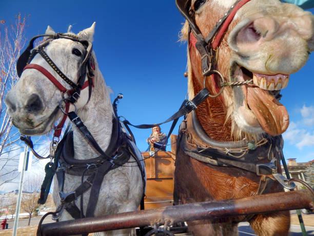 Twee paarden close-up met een verschijnen om te lachen foto