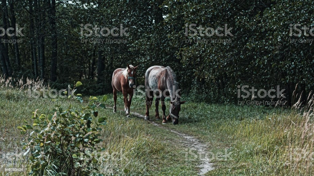 Two horses grassing stock photo