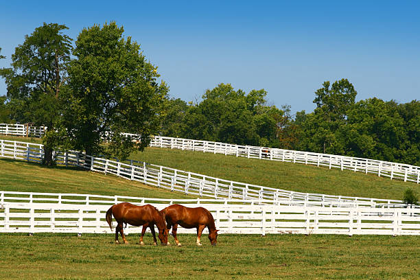 Two horses grazing  ranch stock pictures, royalty-free photos & images