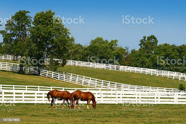 Photo of Two horses grazing