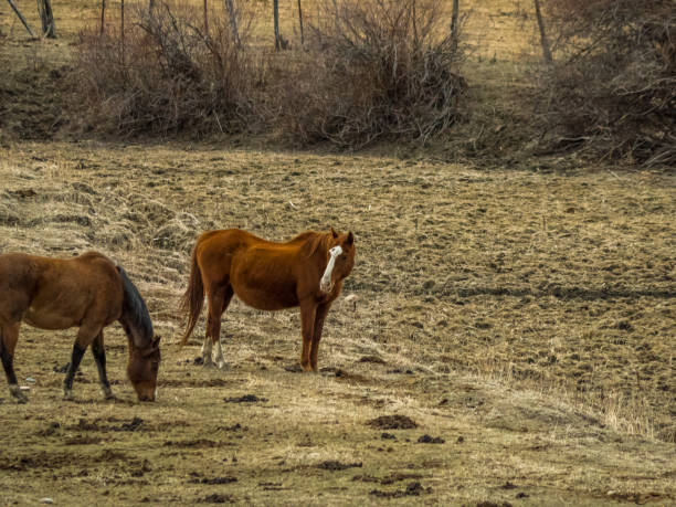 Two horses in a pasture with copy space stock photo