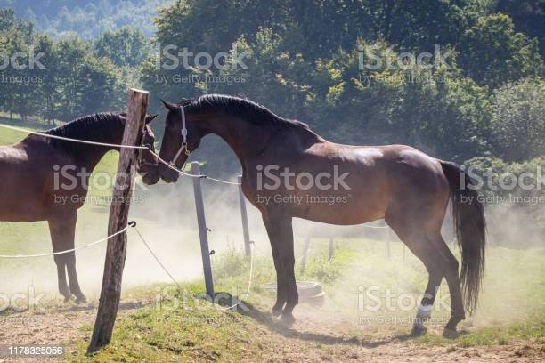 Photo of Two horses in love on pasture. Friendship between domestic animals
