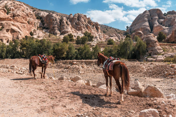 two horses in rocky mountains stock photo
