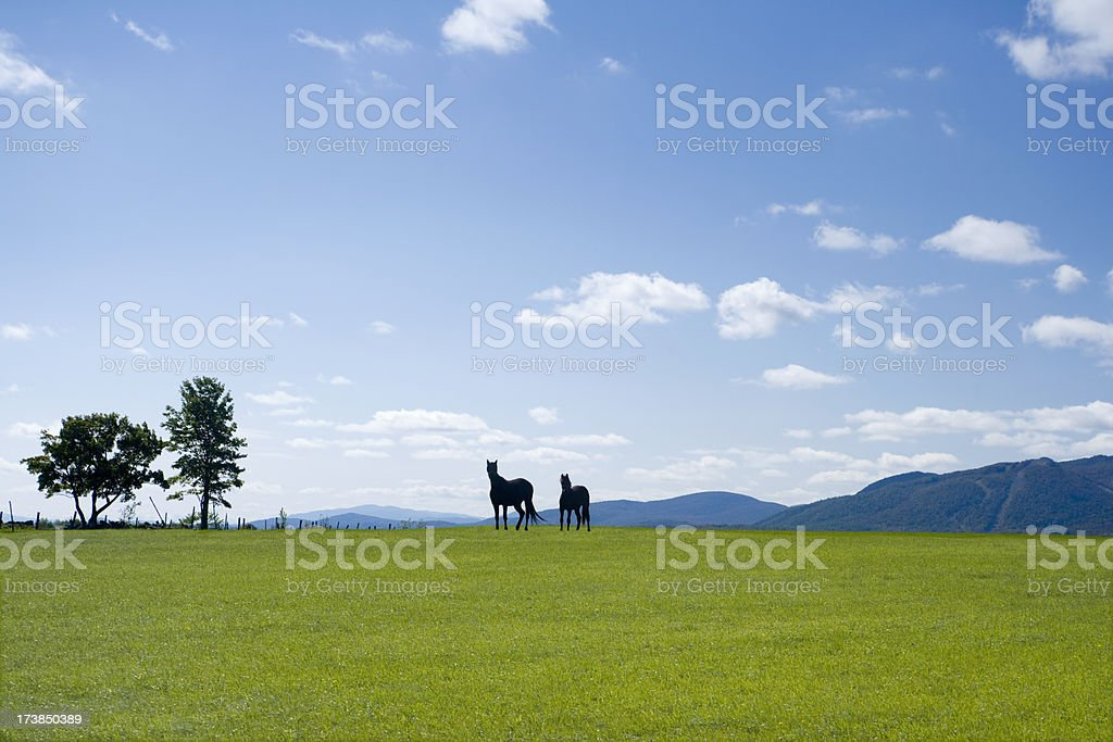 Two horses In The Green Meadow stock photo
