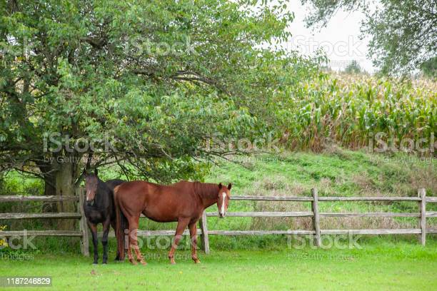 Photo of Two horses in the shade of a tree.
