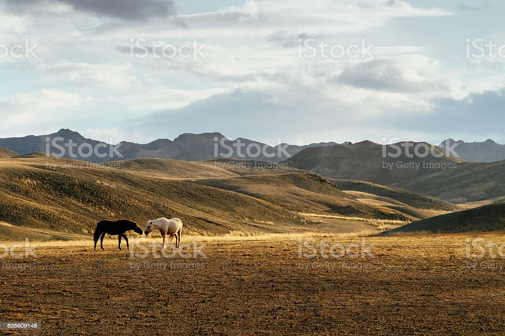 Two horses in the steppe stock photo