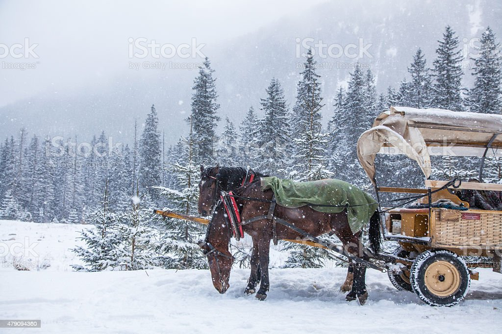 Two horses on a snowy winter day stock photo