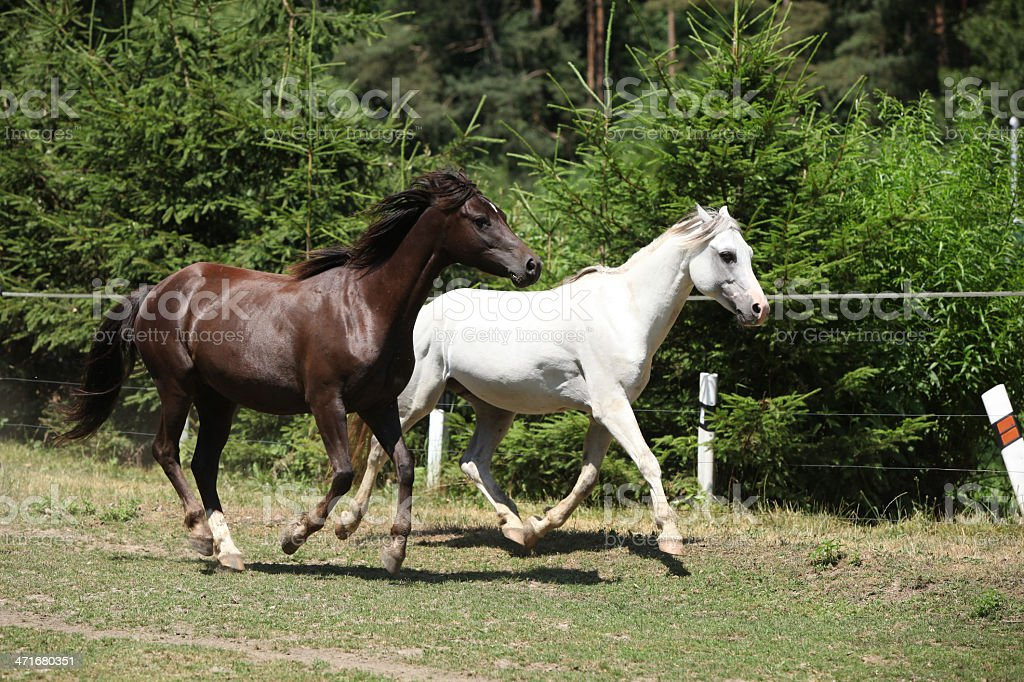Two horses on pasturage next to a bollards royalty-free stock photo