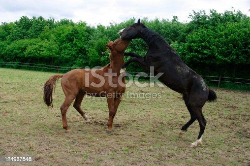 istock Two horses 124987548
