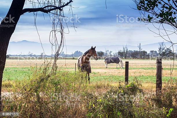 Photo of Two horses with blankets in paddock