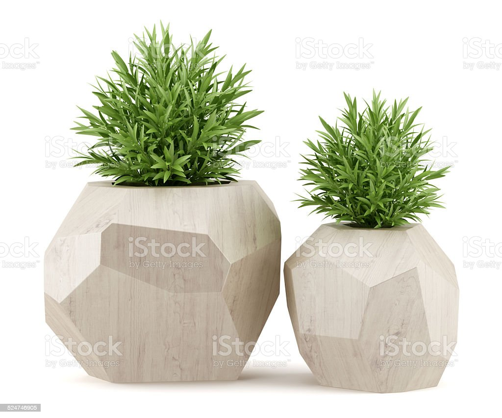 two houseplants in wooden pots isolated on white background royalty-free stock photo
