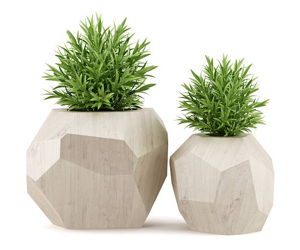 two houseplants in wooden pots isolated on white background stock photo