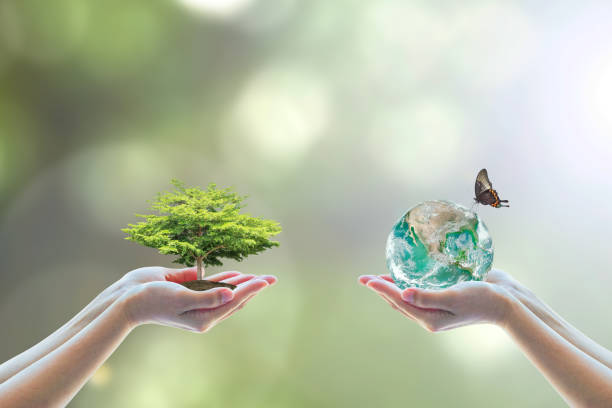 two human hand planting perfect growing tree earth on natural background greenery arbor reforestation conservation csr esg peace campaign world environment day element of this image furnished by nasa - armonia foto e immagini stock