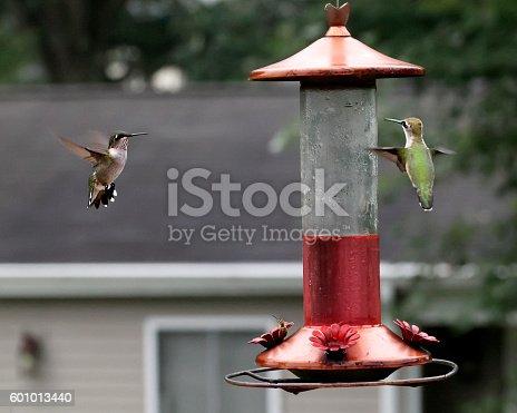 Selective focus.  Bumblebee on left side of feeder. USA