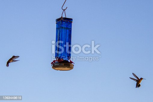Two hummingbirds at a feeder