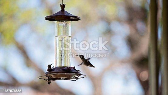 Two hummingbirds at bird feeder