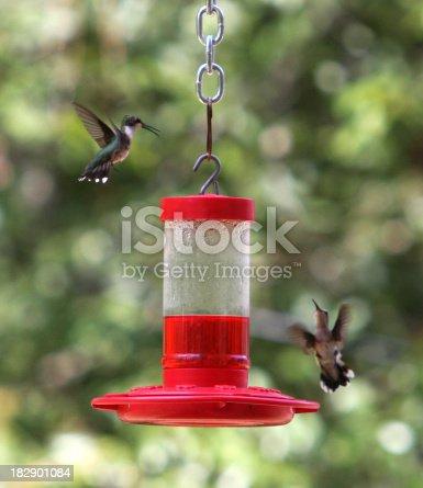 Two hummingbirds hovering near a nectar feedermore hummingbirds